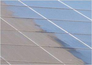 Schwarzer Pilz ist natuerlicher Feind von Photovoltaikanlagen_Foto_ENVARIS GmbH