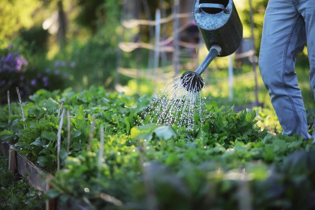 Nachhaltige Gartenbewässerung